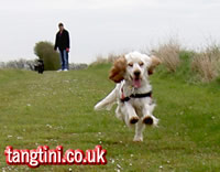 Tango running fast towards her Dad.
