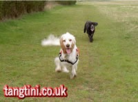"In true Kate Bush style Holly and Tango ar ""Running up that Hill""."