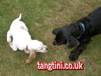 Tango and Holly playing in the garden.