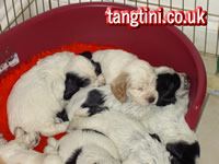Tango asleep with her litter mates.