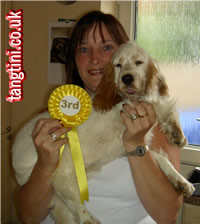 Tango's 3rd place in a puppy competition. I am sure they handed the rosettes out in the wrong order :-)