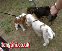 Meeting new puppies at Roger Mugfords in Chertsey