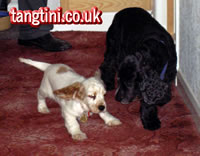 Tango and Holly playing in the Hall
