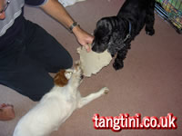 Three way tug of war